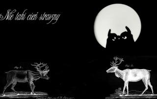 czarna plansza z ozdobnym napisem Nie taki cień straszny i zwierzętami leśnymi (jelenie, sowa) narysowanymi białą kreską. Sowa ukazuje się na tle białego księżyca